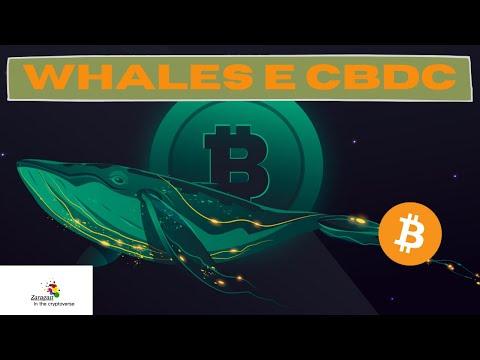 Tra i NUOVI RICCHI delle crypto Whales a le CBDC 🐋